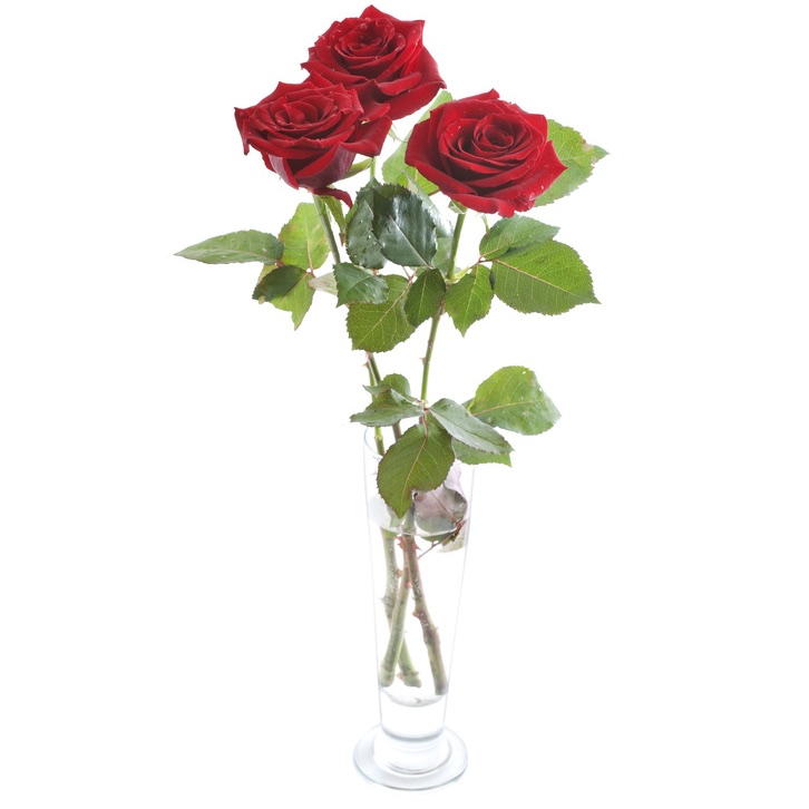 3 red roses in glass vase